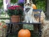 2013-sept-sheltie-picnic-224